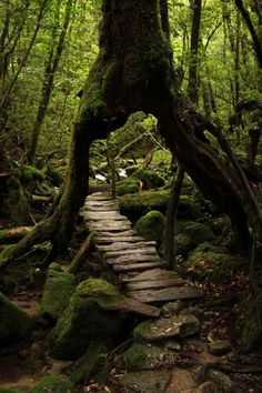 Moss Forest in Yakushima, Kagoshima, Japan 屋久島 鹿児島 日本 Beautiful World, Beautiful Places, Beautiful Forest, Nature Aesthetic, Fantasy Landscape, Forest Landscape, Landscape Architecture, Beautiful Landscapes, Paths