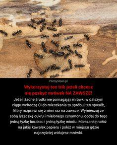 Jeżeli żadne środki nie pomagają i mrówki w dalszym ciągu wchodzą Ci do mieszkania to spróbuj ten sposób, który rozprawi ... Cleaning Hacks, Gardening Tips, Helpful Hints, Life Hacks, The Cure, Diy And Crafts, Advice, Thoughts, Inspiration