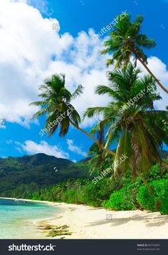 Palms Panorama Bay Стоковые фотографии 86759005 : Shutterstock