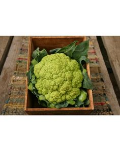 Green Harmony Cauliflower -- Pinetree -- doesn't require wrapping, mild combination of flavor between broccoli and cauliflower, 55 days -- pkt (30) 1.75