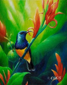Variable Sunbird Painting by Christopher Cox