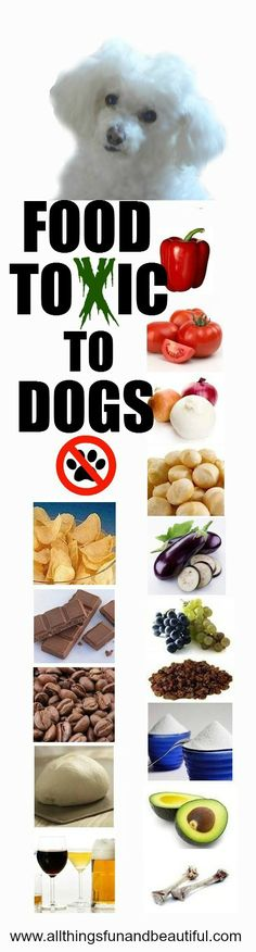 Do you know what foods are harmful to your dog?.  Most of us know about chocolate and alcohol, but what about red pepper, tomatoes, onions, garlic, macadamia nuts, avocado, just to name a few: Here is a list at: http://www.allthingsfunandbeautiful.com/pets-animals-1/food-health/   Keep your dog safe and healthy these holidays.