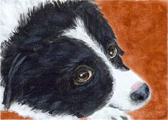 """Soulful Eyes"" - a Border Collie pup with those big beautiful eyes - an original painting by North Carolina artist, Fran Brooks. www.artistnannie.com"