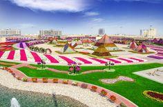 Dubai Miracle Garden 1