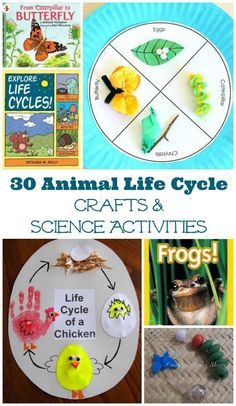 Animal Life Cycle Project Ideas & Activities Kids will enjoy these books, crafts and hands-on activities that explore animal life cycles!Kids will enjoy these books, crafts and hands-on activities that explore animal life cycles! Science Projects For Kids, Animal Science, Preschool Science, Science Classroom, Science For Kids, Science Activities, Science Crafts, Science Experiments, Science Nature