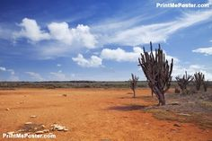 Poster of Desert landscape on the Hato Plain, Curaçao,