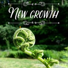 #fern #newgrowth #gr