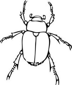 Black and white clip art of a insects - Yahoo Search Results Yahoo Canada Image Search Results