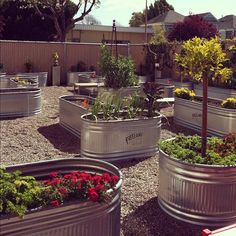 The outdoor container gardens at Annie's in Berkeley... things are looking pretty darn good! #gardening