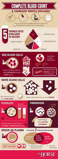 What Does Your Horse's Blood Test Mean? Reading a blood test can be confusing. Here's a helpful infographic developed by that describes a typical blood test and what it's results might mean for your horse. Vet Tech Student, Nursing Students, Nursing Schools, Nursing Pneumonics, Don Du Sang, Vet Assistant, Office Assistant, Medical Laboratory Science, Pet Vet
