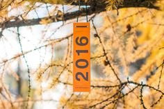 Autumn, leaves, orange, calendar
