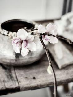 vintagepiken: Spring