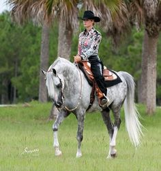 Arabian western pleasureArabian Horse Arabian Horse Show - Western Competition Egyptian Stallion Breeding
