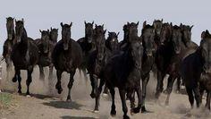 Thundering herd. Spain