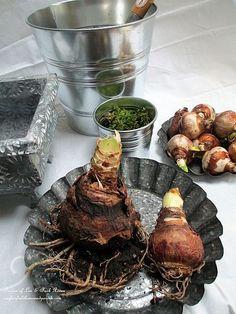 How to plant your own amaryllis & paperwhites planter (Garden of Len & Barb Rosen)