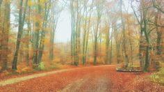Herbst und Nebel am Isar-Hochufer