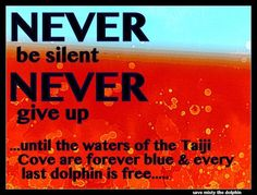 via Save Misty the Dolphin