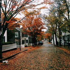 Changing colours of leaves down this suburban street