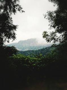 tree, nature, beauty in nature, growth, landscape, no people, forest, scenics, day, tranquility, fog, outdoors, sky, tranquil scene, plant, hazy, freshness