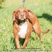 Euthanasia Date:Oct 30, 2014 -  Located in Elizabethton, TN -  Hardy is a male Beagle   read more