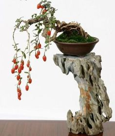 Bonsai Art of Creativity - Tears of Beauty, Hanging Fruits of Life...