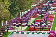 Jardín Al Ain -Emiratos Árabes Unidos