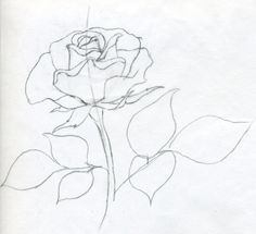 rose draw drawings sketches simple drawing easy pencil sketch step realistic flower very simply roses flowers line tutorial easily hard
