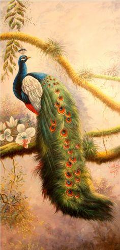 Bruno Tina. Peacock