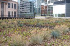 Passive Commercial Green Roofs  Philadelphia Water Department