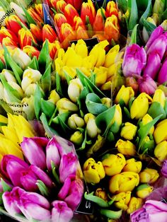 Bouquets of Tulips