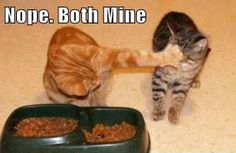 Awww, poor little kitty. I'll make that big ginger bully let you eat!