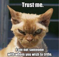Trust me Funny Cat Fails, Cat Memes, Funny Cats, Funny Animals, Cute Animals, Funniest Animals, Grumpy Cat, Scary Cat, Creepy