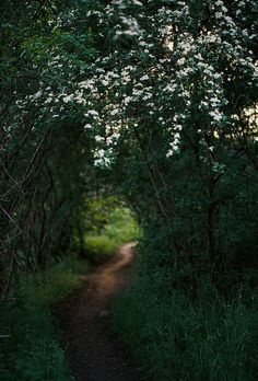 Inward goes the secret path by Picea abies on Flickr.