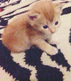 So cute darrel