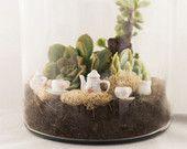 Terrarium Kit - Custom Succulent Arrangement - By The Garden Hoes