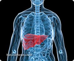 Five herbs your liver will love - detox, boost function and more