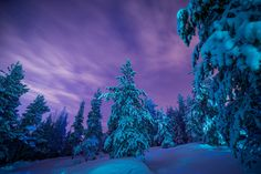 Earth Winter  Earth Blue Snow Dusk Forest Nature Tree Wallpaper