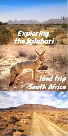 Complete road trip itinerary for the Kalahari region in South Africa, including Kgalagadi Transfrontier park. Camping/safari trip through the Northern Cape. Travel Maps, Africa Travel, Travel Destinations, Road Trip Map, Road Trips, South Africa Safari, Beautiful Places To Visit, Cape Town, Travel Around