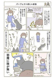 【期間限定!毎日連載】「うちの猫がまた変なことしてる。」第11話
