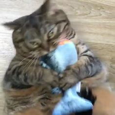 Let see of cat bath/wet cat, Cats are cute and cuddly animals. The independent nature of makes them an ideal choice as pets. Cute Funny Animals, Funny Animal Pictures, Cute Baby Animals, Animals And Pets, Cute Cats, Funny Cats, Adorable Kittens, I Love Cats, Crazy Cats