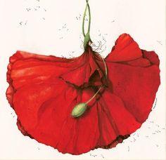 kenzo flower | looks like a poppy ...