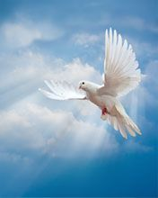Animal White Dove beautiful dove wallpapers with clear blue sky Dove Images, Dove Pictures, Jesus Pictures, Pretty Birds, Beautiful Birds, Image Jesus, Dove Bird, Image Nature, White Doves