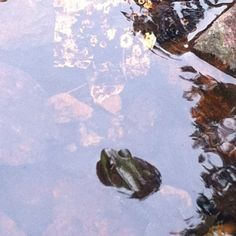 Little frog friend I made in Gatineau Park Ottawa, Diagram, Map, Nature, How To Make, Painting, Painting Art, Paintings, Maps