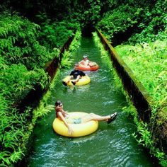 Is this your idea of fun...Canal tubing through canals in Kauai, Hawaii? #travel