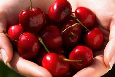 SHTF Medical Tip of the Day: 10 reasons to add Cherries to you SHTF Preps (Good and good for you)