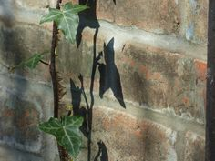https://flic.kr/p/tyNxvb | P1720238c Wabi Sabi . . The Old Wall, in Shadow .. | Beneath the Gt.Tits' nest* . . ever evolving ..  * & that's (yet!) another story (eventful !) . . ! !!