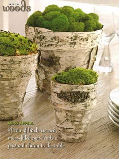 Birch and Moss Pots. decorating the pots. maybe mix with burlap/lace wrapped