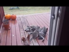 Funny animals-2 - YouTube