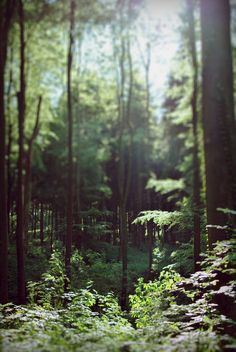 I took off my shoes and walked into the woods. I felt lost and found with every step I took.