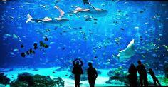The largest aquarium in the world (Georgia Aquarium).  El acuario más grande del mundo (Acuario de Georgia).